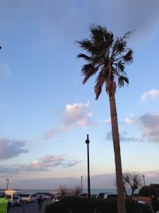 スタート前の袖ヶ浦海浜公園。朝は寒かったが天候にめぐまれました