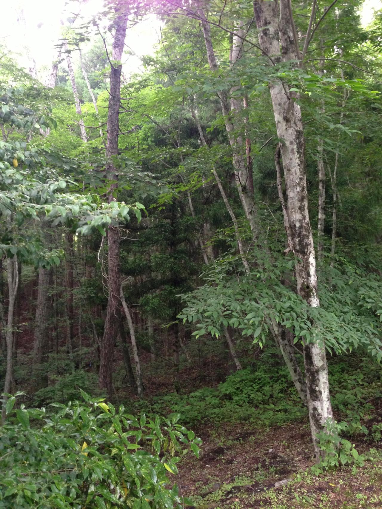 林は楽しいけど怖い